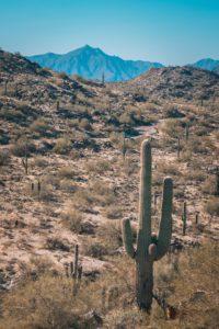 Carefree dumpster rental - best dumpster rentals in Arizona